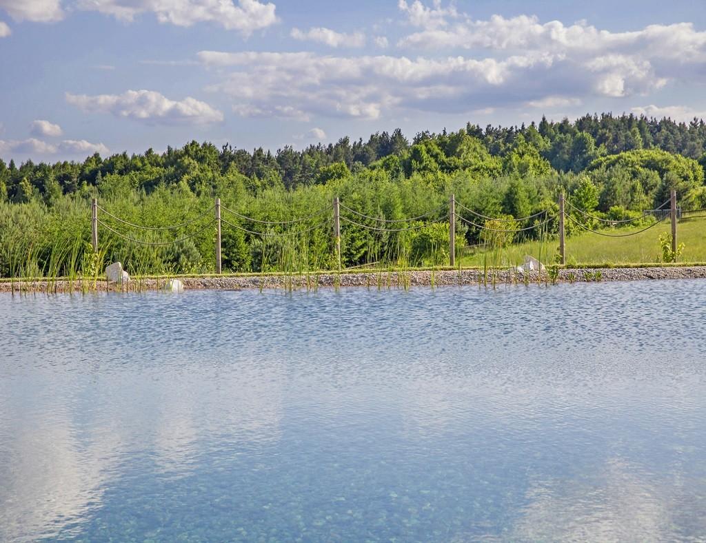 Naturalny basen kąpielowy z widokiem na las