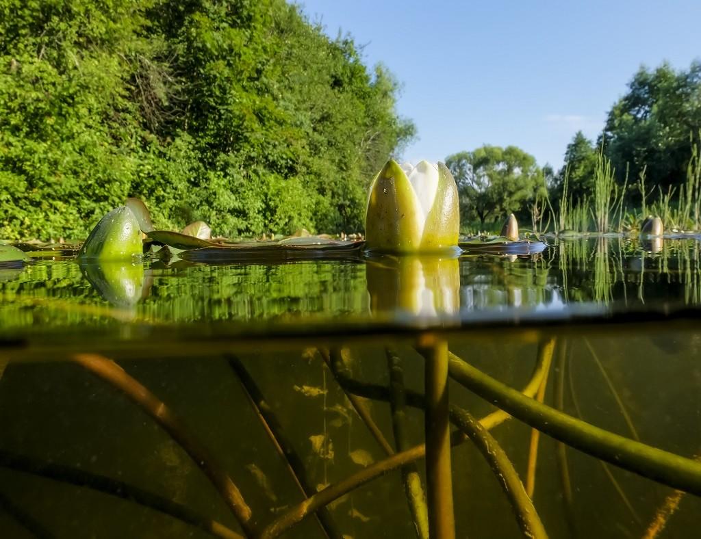 Przejrzysta woda w naturalnym stawie poddanym procesowi rekultywacji