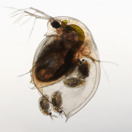 Zooplankton w stawie kąpielowym